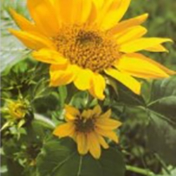 Postkarte-Ansichtskarte-Blumen-G1-150