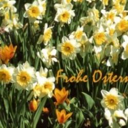 Postkarte-Ansichtskarte-Blumen-GO2